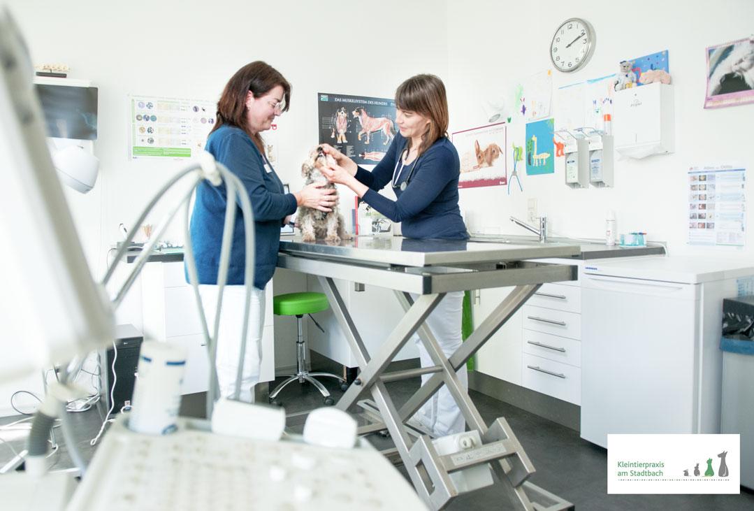 tierarztpraxis günzburg