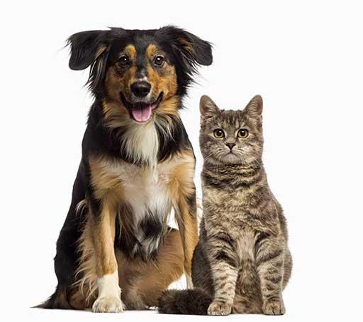 hund katze tierazt