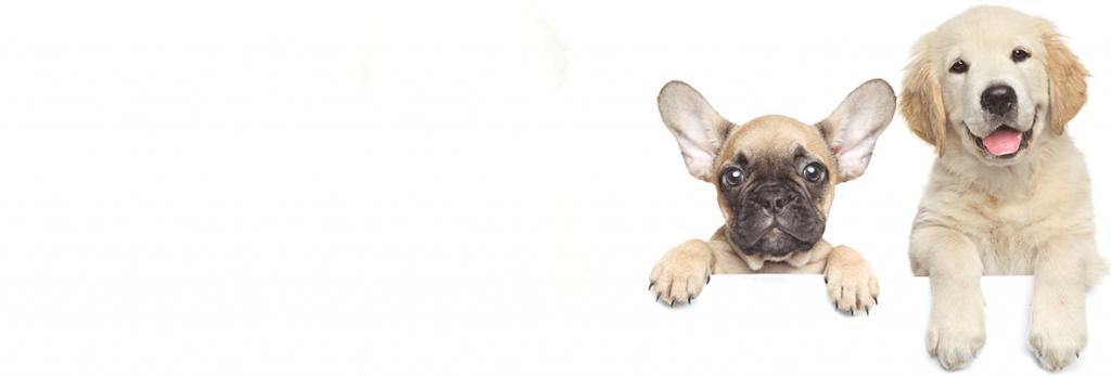 kleintierpraxis tiere günzburg